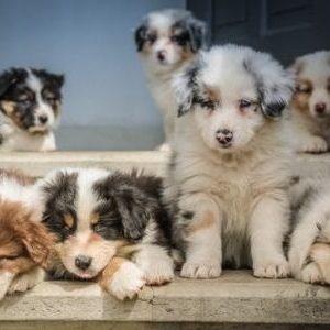 Puppy kauwartikelen
